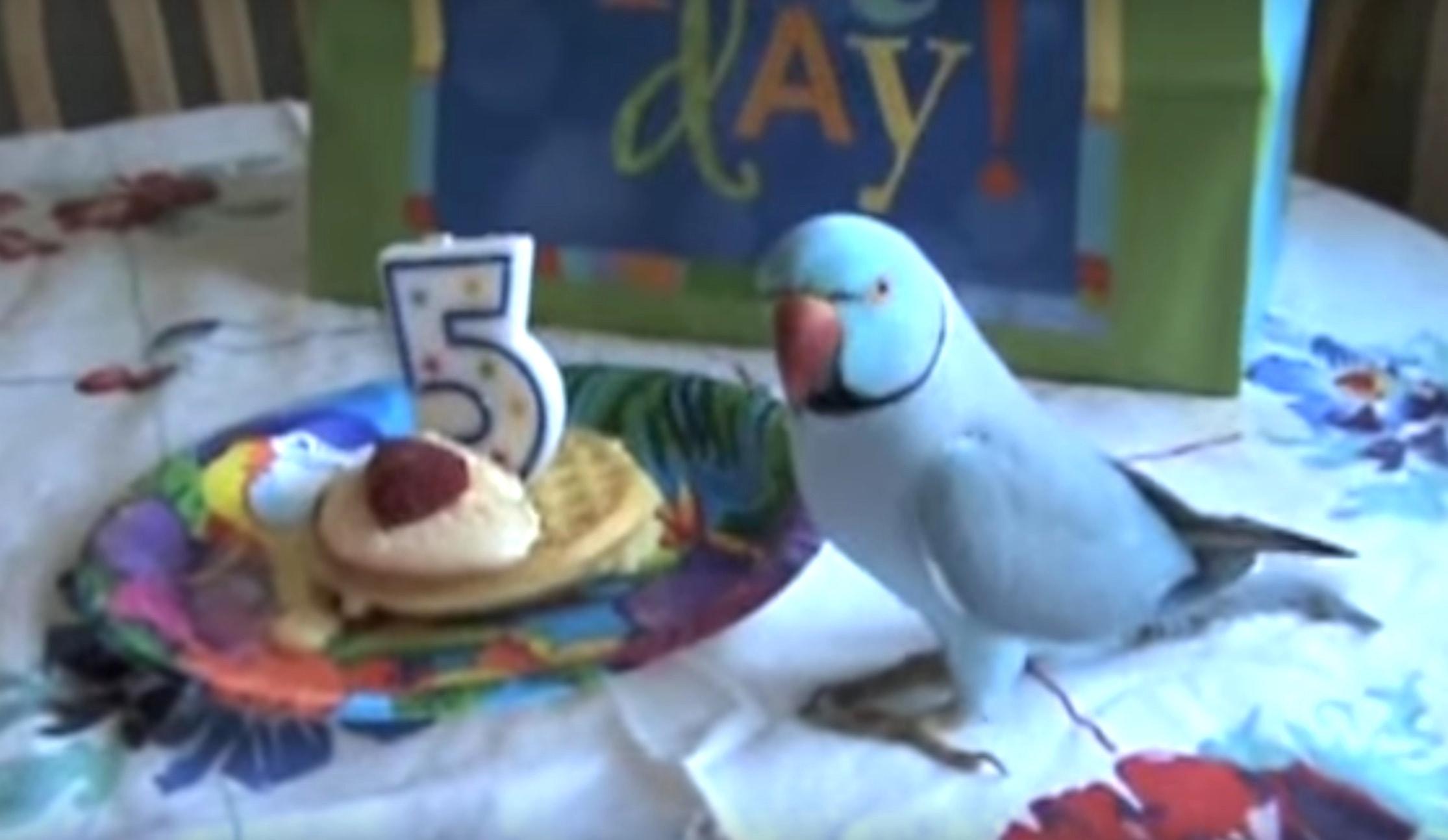 Картинки с днем рождения с попугаем