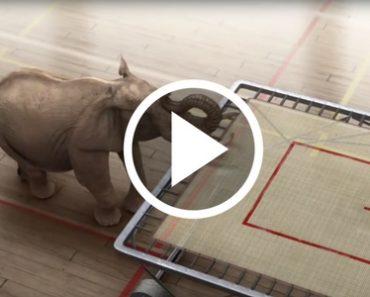 elephant trampoline